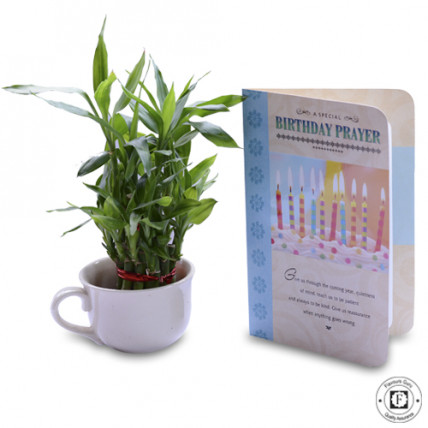 Lucky Bamboo With Greeting Card